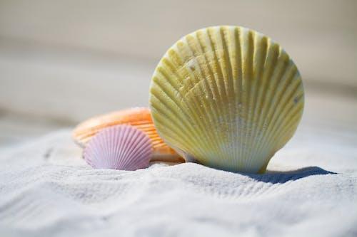 Foto profissional grátis de à beira-mar, areia, beira-mar, conchas