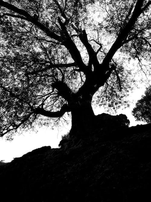 Ilmainen kuvapankkikuva tunnisteilla musta, puu, siluetti