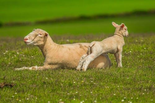 çayır, çim, doğa, hayvanlar içeren Ücretsiz stok fotoğraf