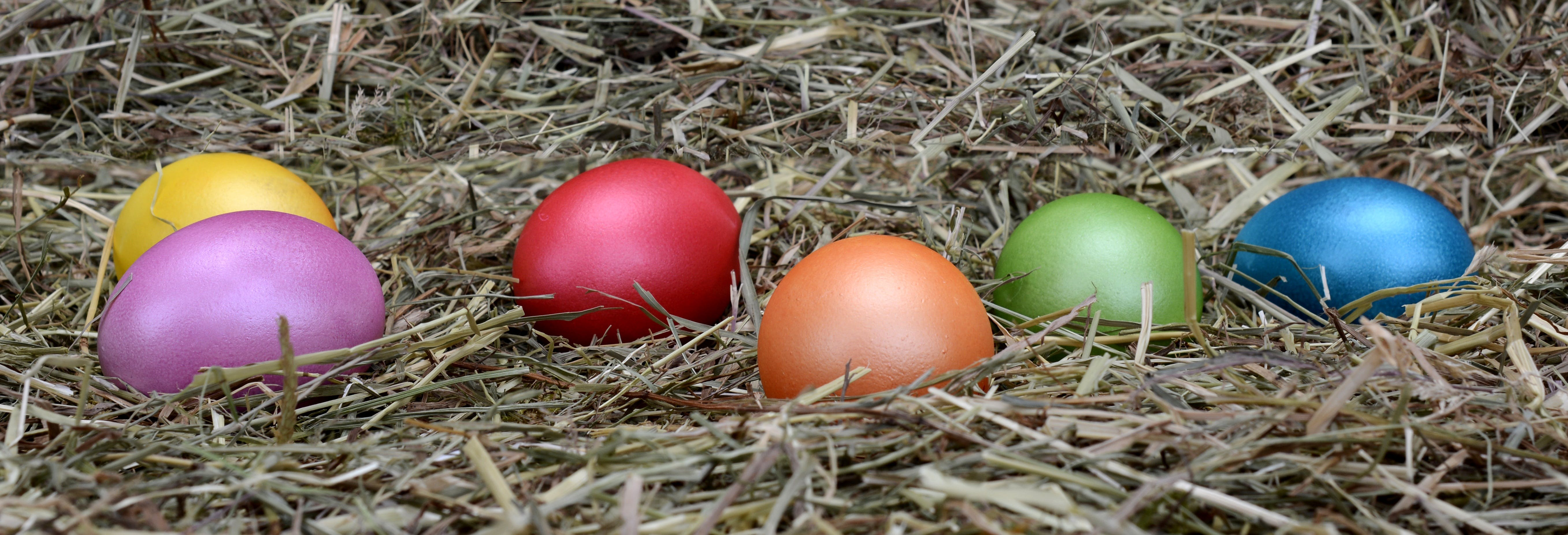 Free stock photo of banner, color, colorful, colorful eggs