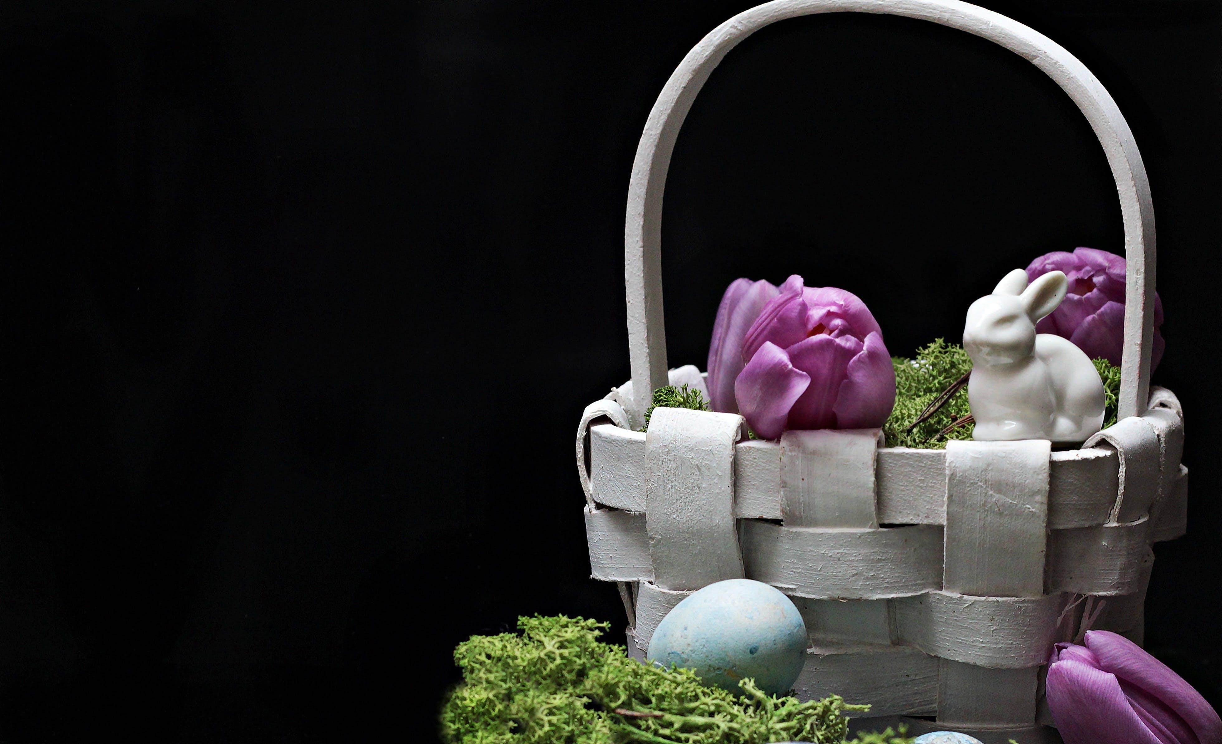 Free stock photo of flowers, blue, purple, moss
