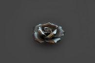 feelings, plant, grey