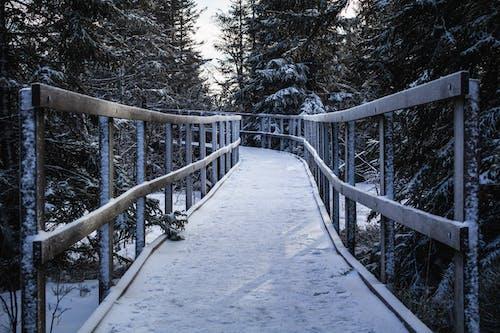 Immagine gratuita di alberi, boschi, camminare, congelare