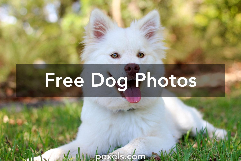 Dog Images Pexels Free Stock Photos