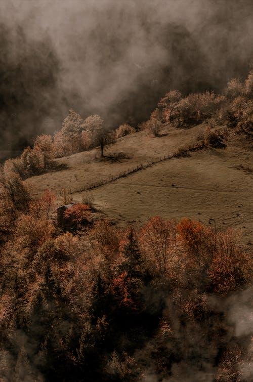 Photos gratuites de arbres, aube, automne, brouillard