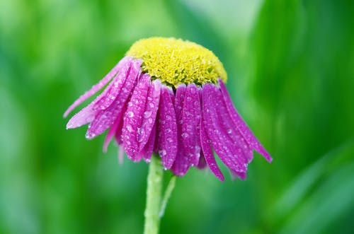 Ilmainen kuvapankkikuva tunnisteilla kasvi, kesä, kukikas, kukka