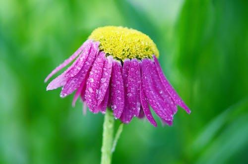 Kostnadsfri bild av blomma, blommig, blomning, makro