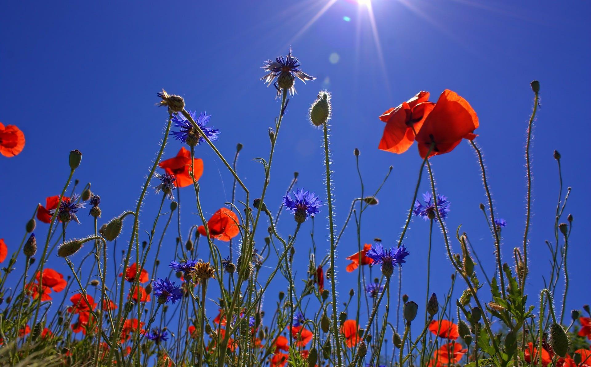 Orange Multi Petaled Flower Under Blue Sky during Daytime
