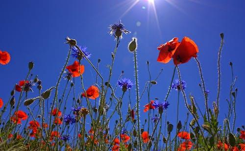 Fotobanka sbezplatnými fotkami na tému divé kvety, flóra, kvet ovocného stromu, kvety
