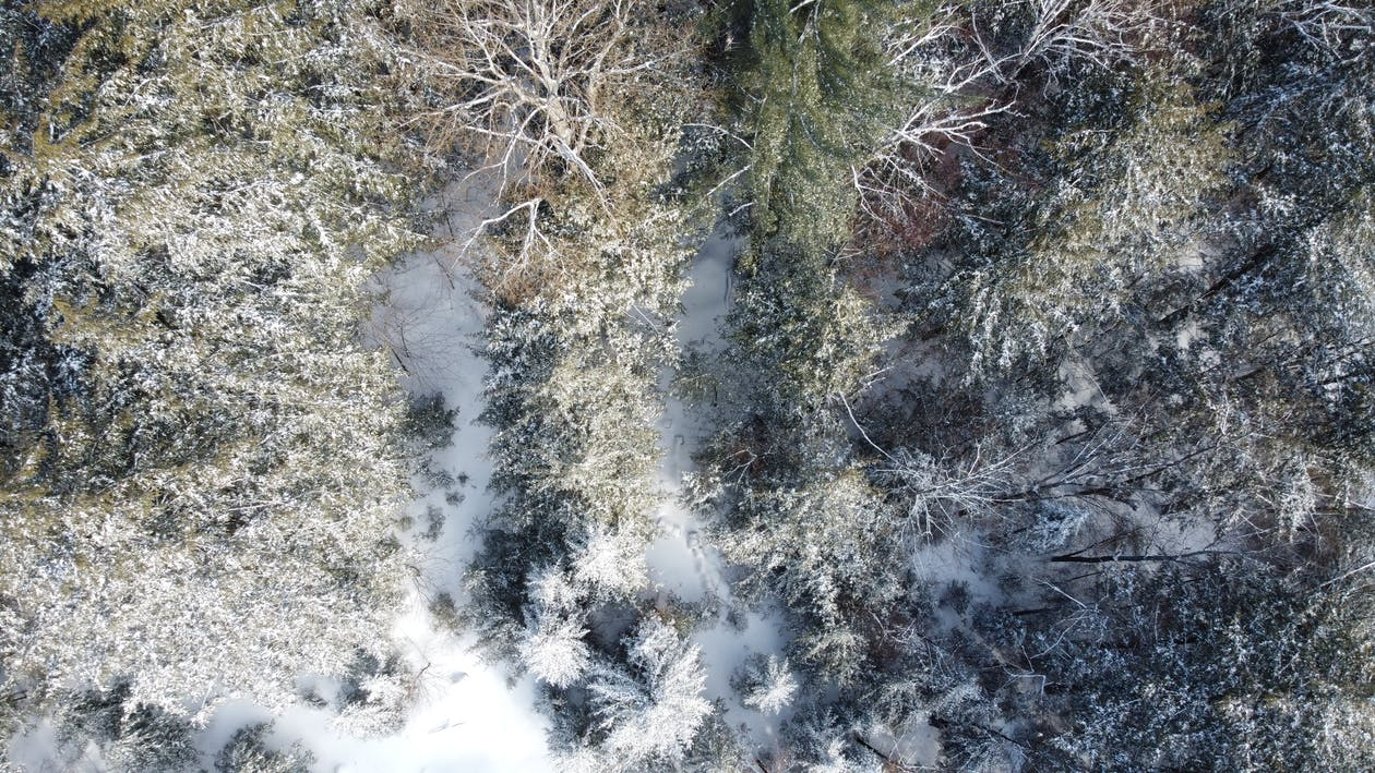 Aerial View of Trees on Snowfield