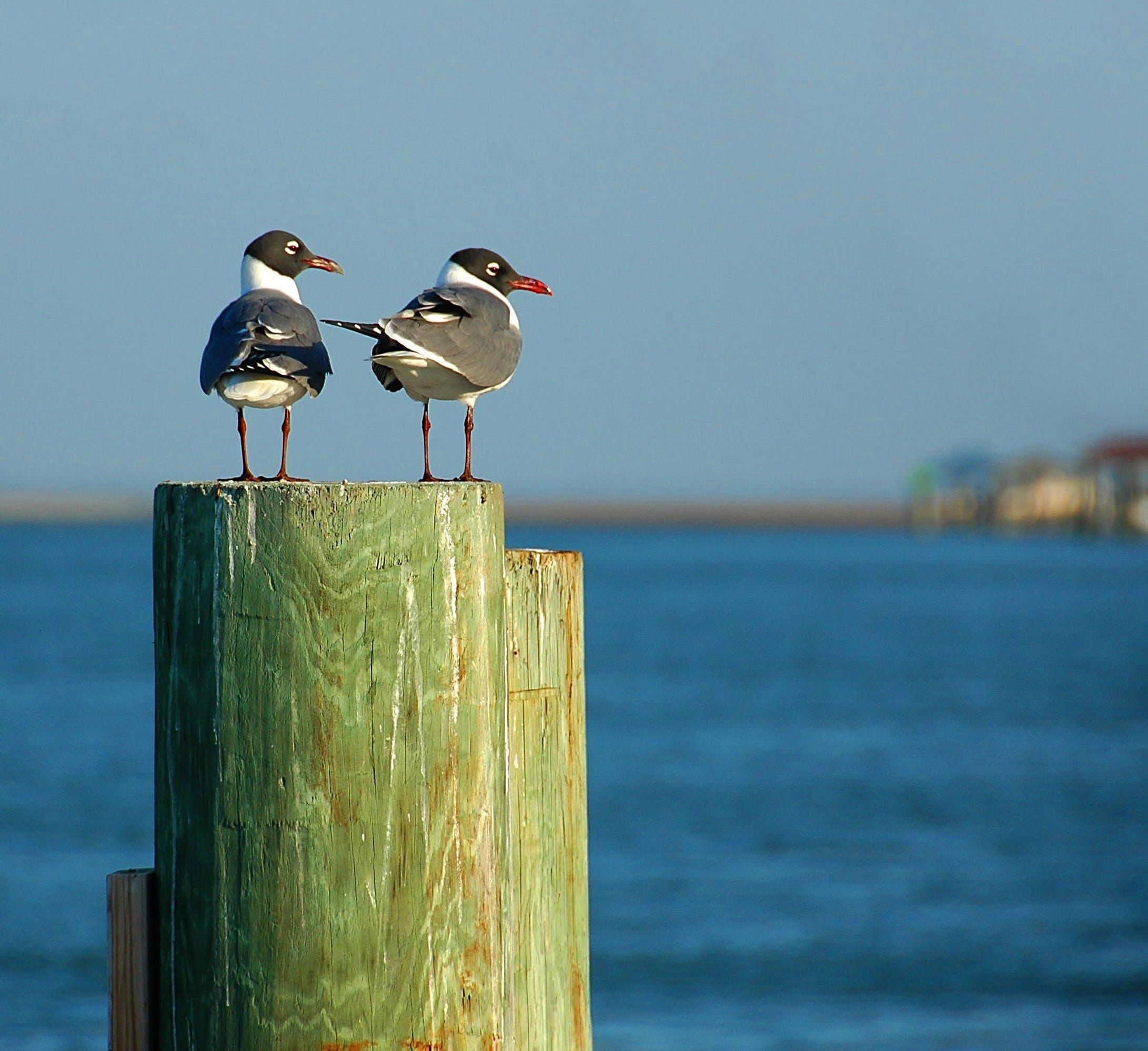 Free stock photo of sea, nature, bird, flying