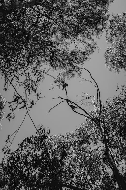 アウトドア, シルエット, モノクローム, 木の無料の写真素材