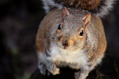 Imagine de stoc gratuită din adorabil, animal, blană