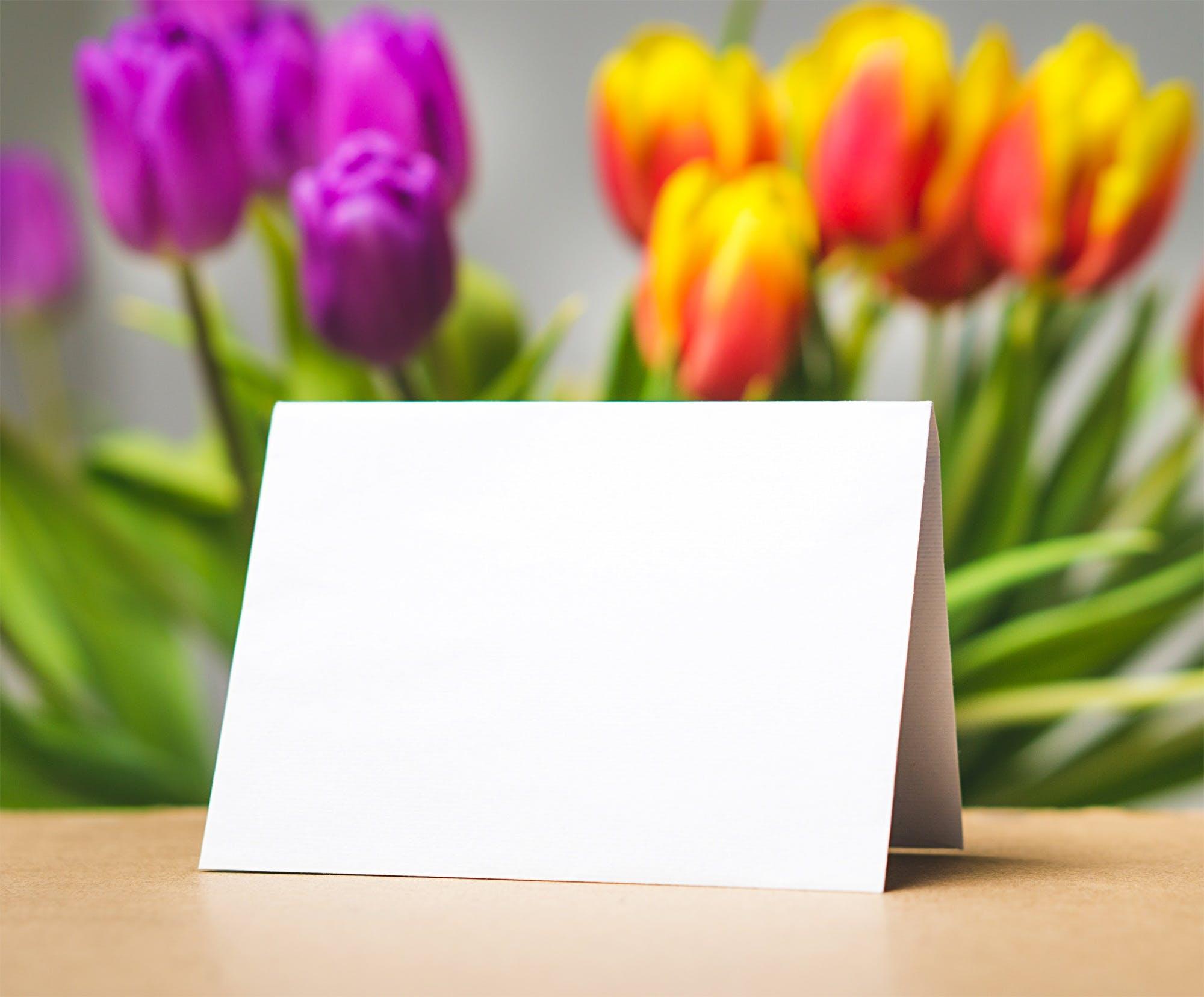 beautiful, blank, blooming