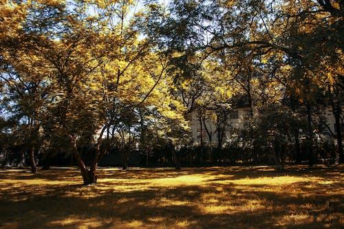 Photos gratuites de jardin arboré