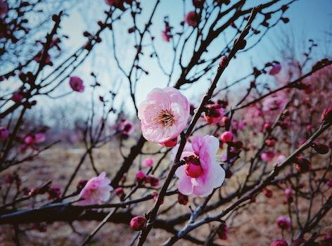 Free stock photo of nature, flowers, petals, tree