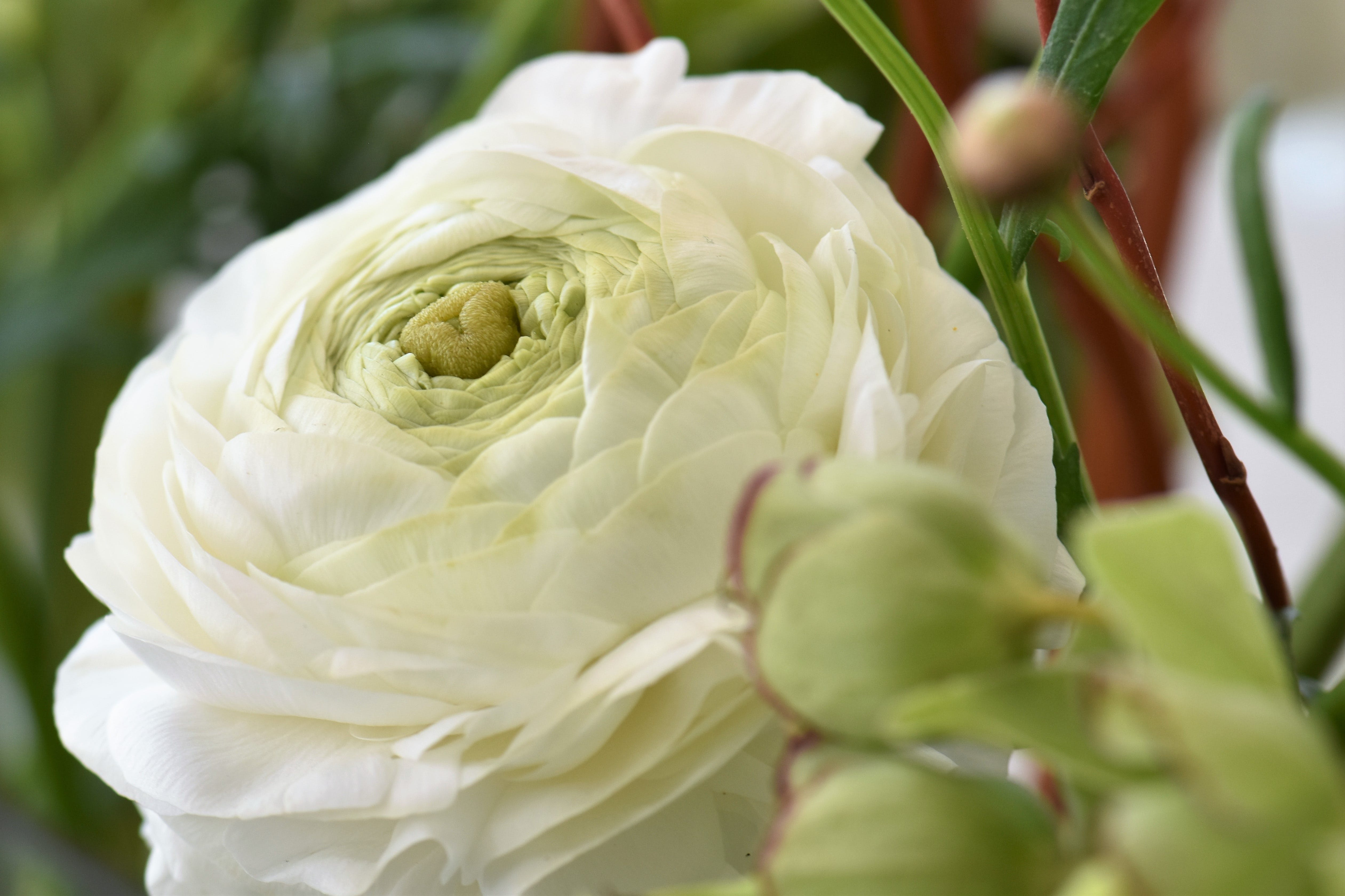 Free stock photo of bouquet, christian roses, flower blossom, leaves
