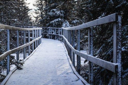 ağaçlar, ahşap, Güneş, kar içeren Ücretsiz stok fotoğraf