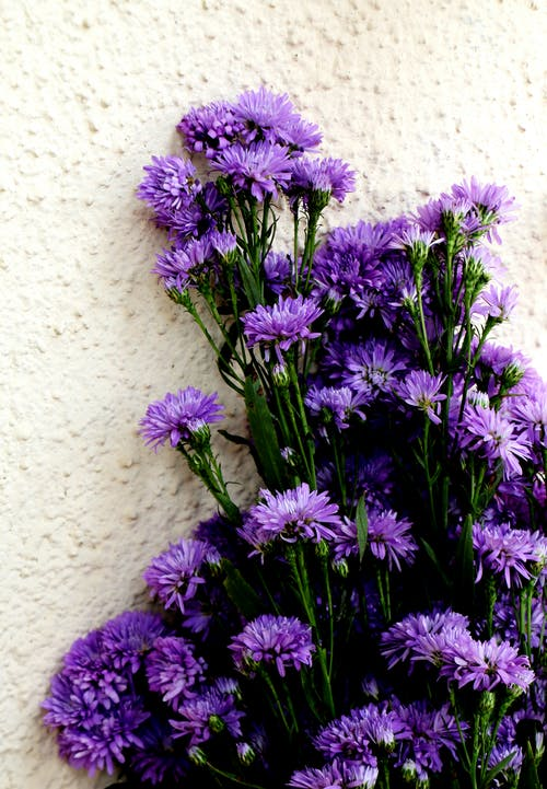Безкоштовне стокове фото на тему «#flower, #flowers»