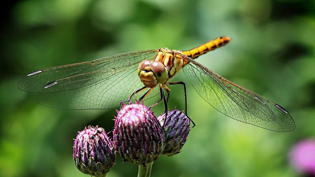 Eyes Of A Dragonfly Nature Dew Cute Macro Hd Wallpaper: Dragonfly On The Stick Near Spider Web · Free Stock Photo