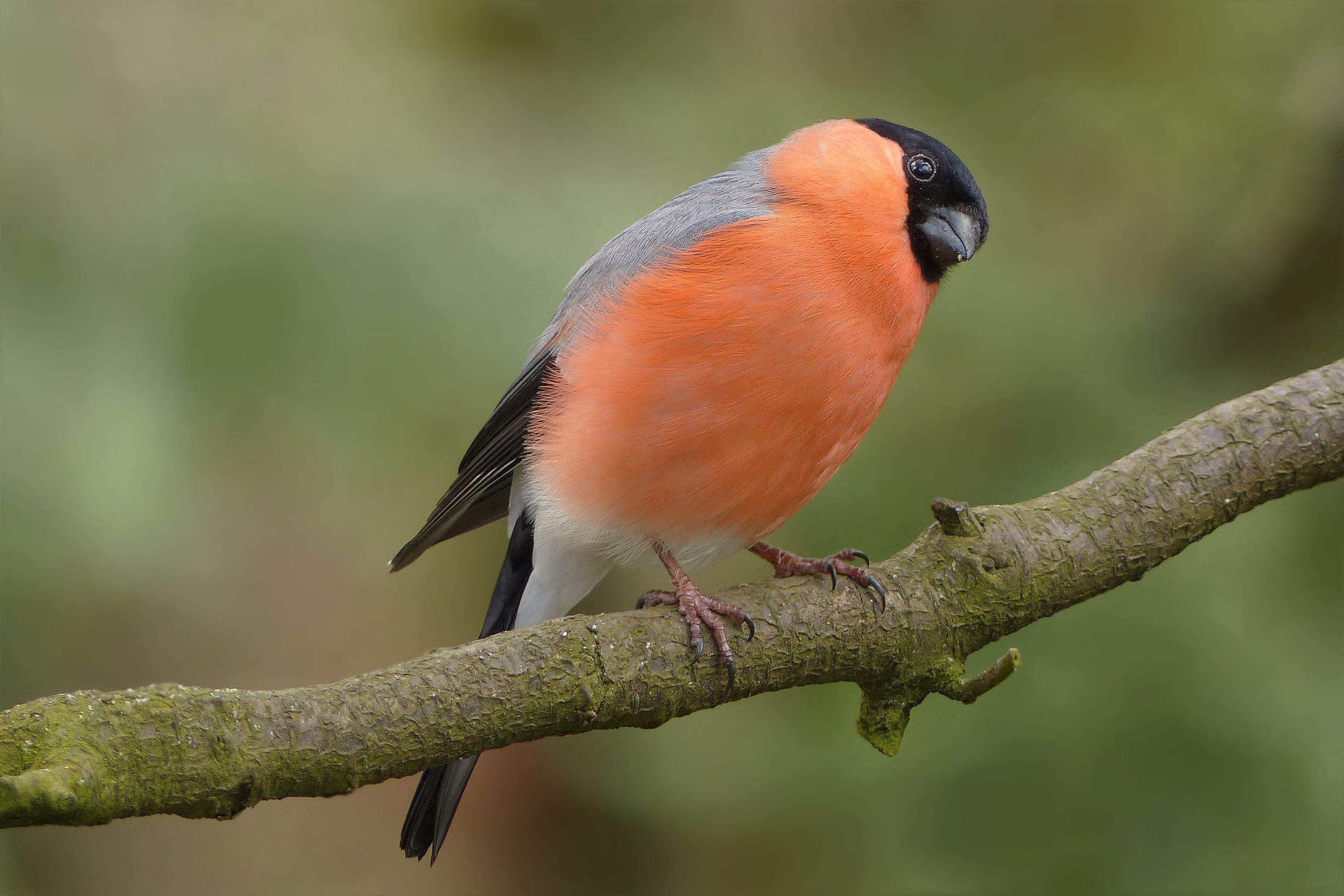 Orange and Black Bird Perched on Brown Stem