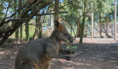 คลังภาพถ่ายฟรี ของ สัตว์, สัตว์ป่า, ออสซี่, ออสเตรเลีย