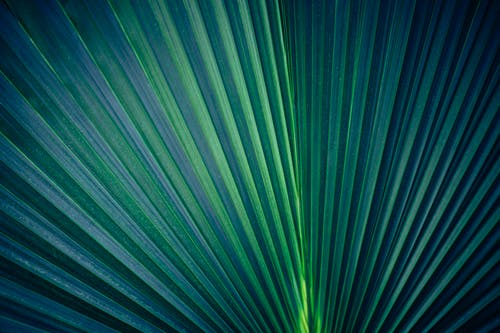 Photo of Dark Green Leaf