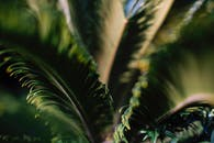 Close Up of a Green Palm Tree