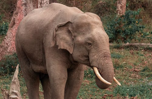 Photo of Grey Elephant