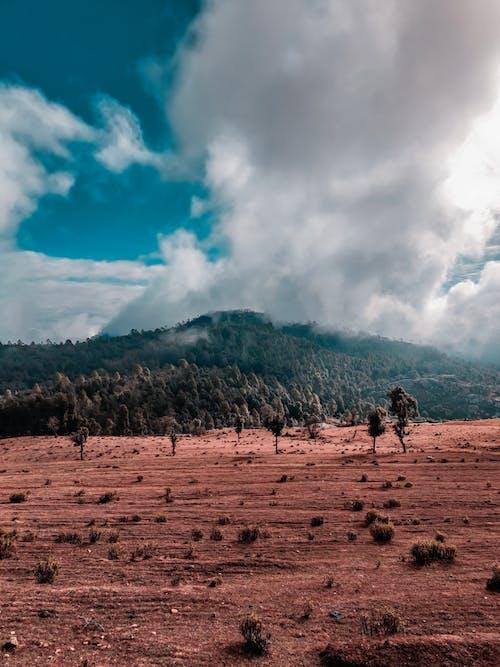 Ingyenes stockfotó domb, ég, erózió, fák témában