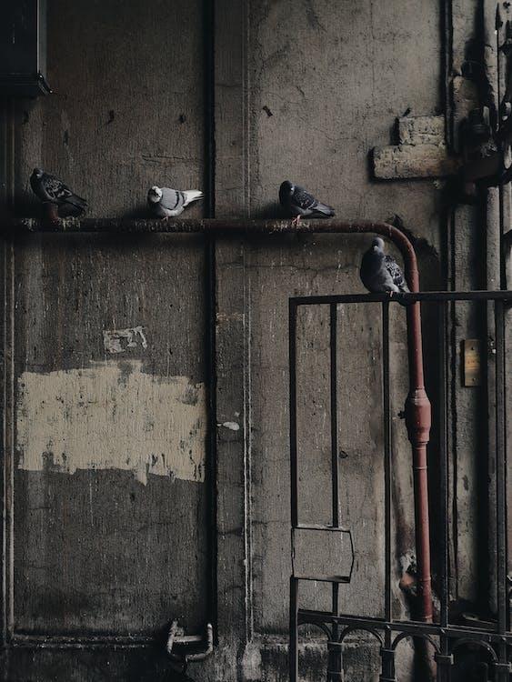 abandonat, arhitectură, burlane
