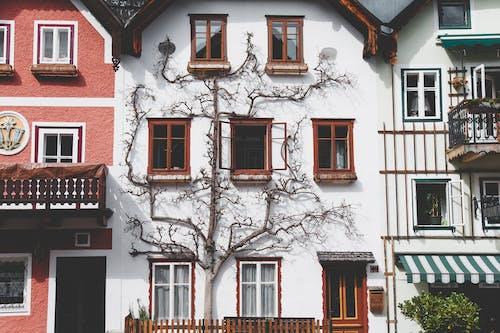 Kostenloses Stock Foto zu architektur, außen, balkon, baum