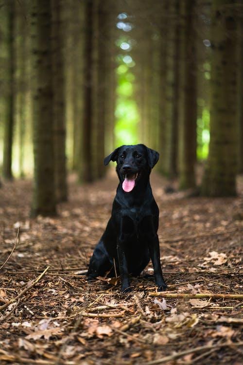 Immagine gratuita di adorabile, alberi, animale, animale domestico