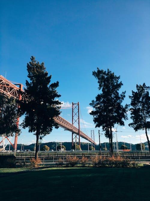 Cầu Treo Gần Cây