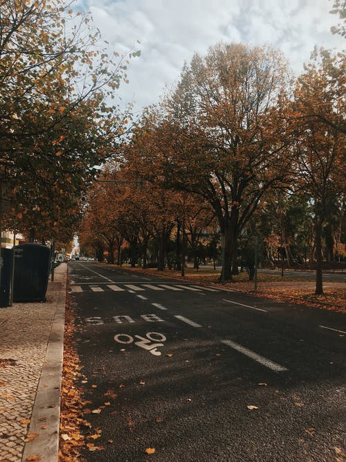 Asphalt road between trees in city on autumn day