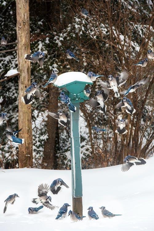 Flock of Birds on Post Lamp