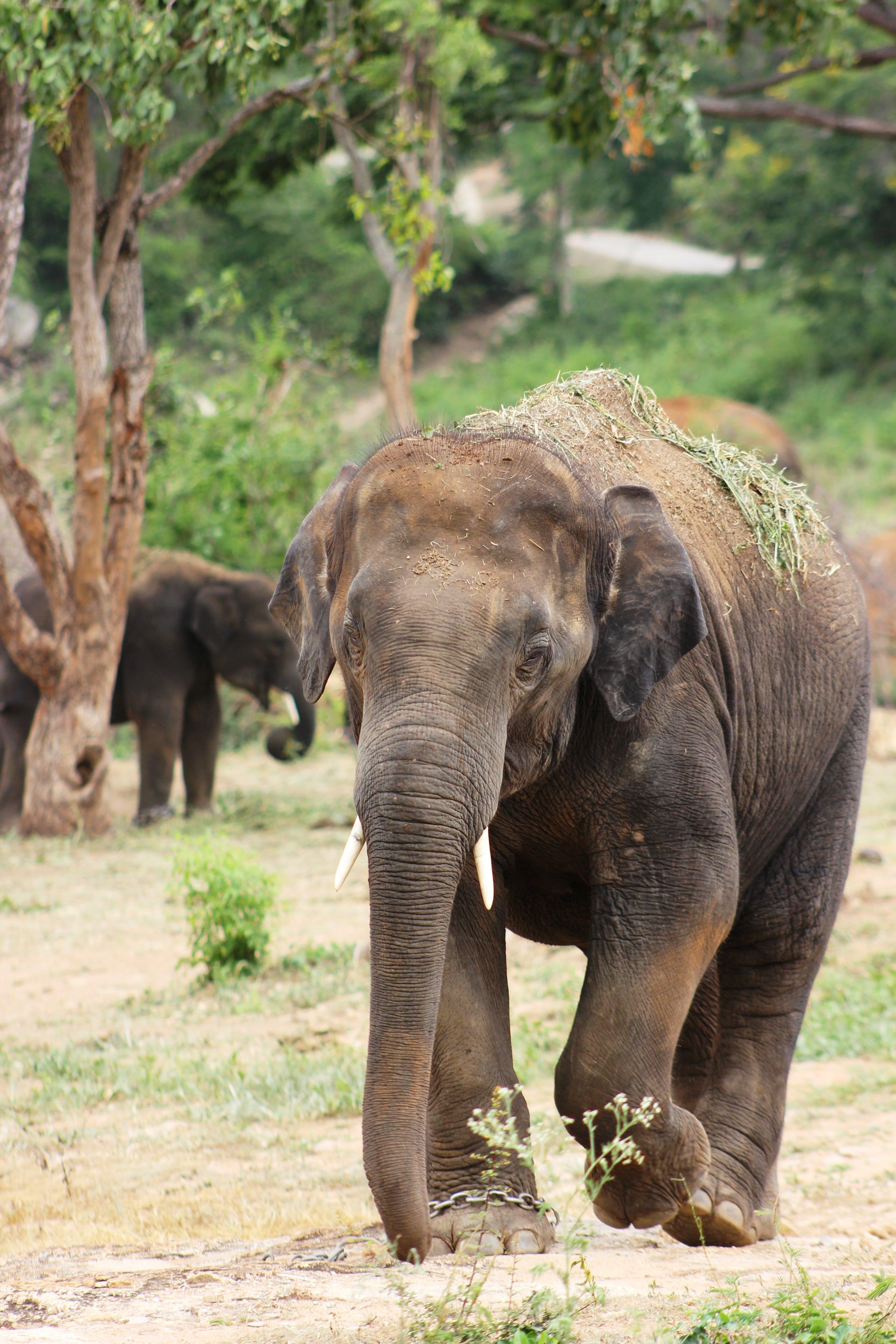 Brown Elephant on Ground