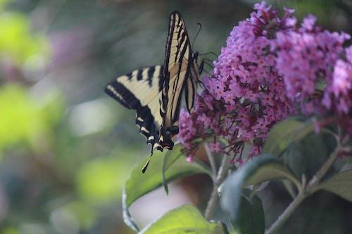 Fotos de stock gratuitas de mariposa, mariposa en una flor