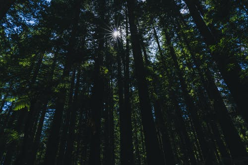 Free stock photo of dense forest, forest, nature