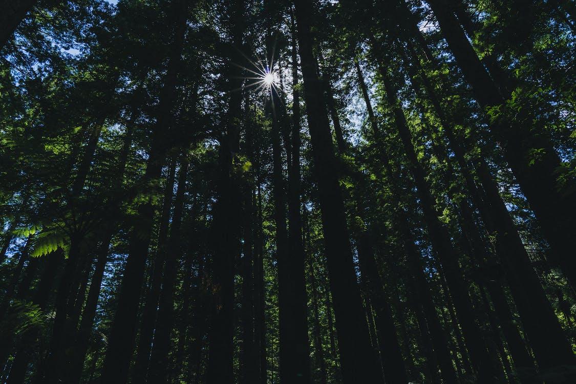 Ingyenes stockfotó erdő, magas fák, sűrű erdő témában