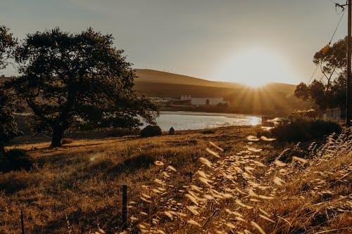 Kostnadsfri bild av landskap