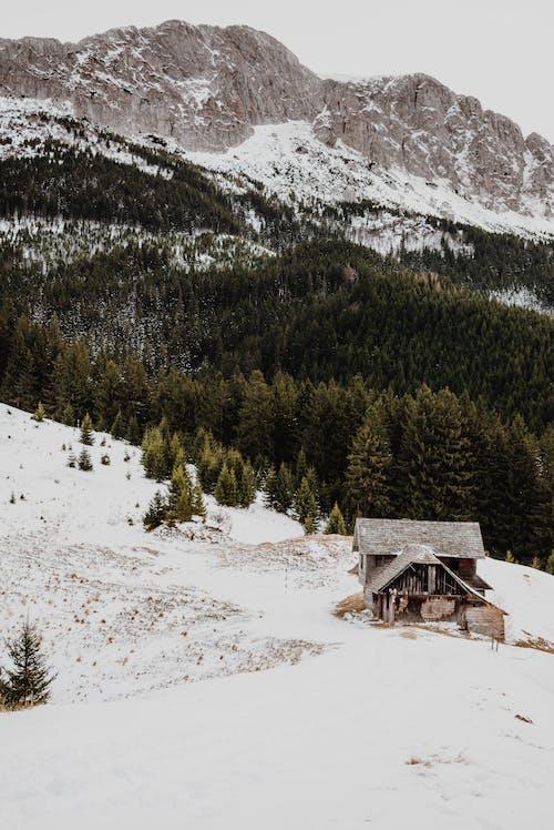Imagine de stoc gratuită din alpin, anotimp, arbori, arbori veșnic verzi