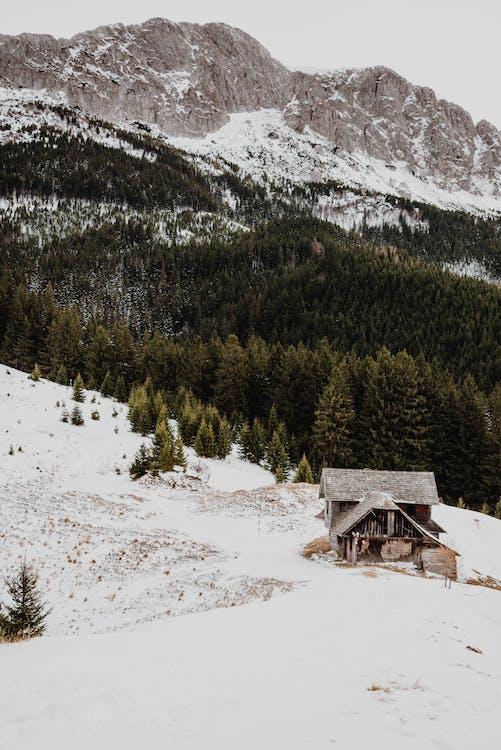 Коричневый деревянный дом на заснеженной земле возле зеленых сосен и горы