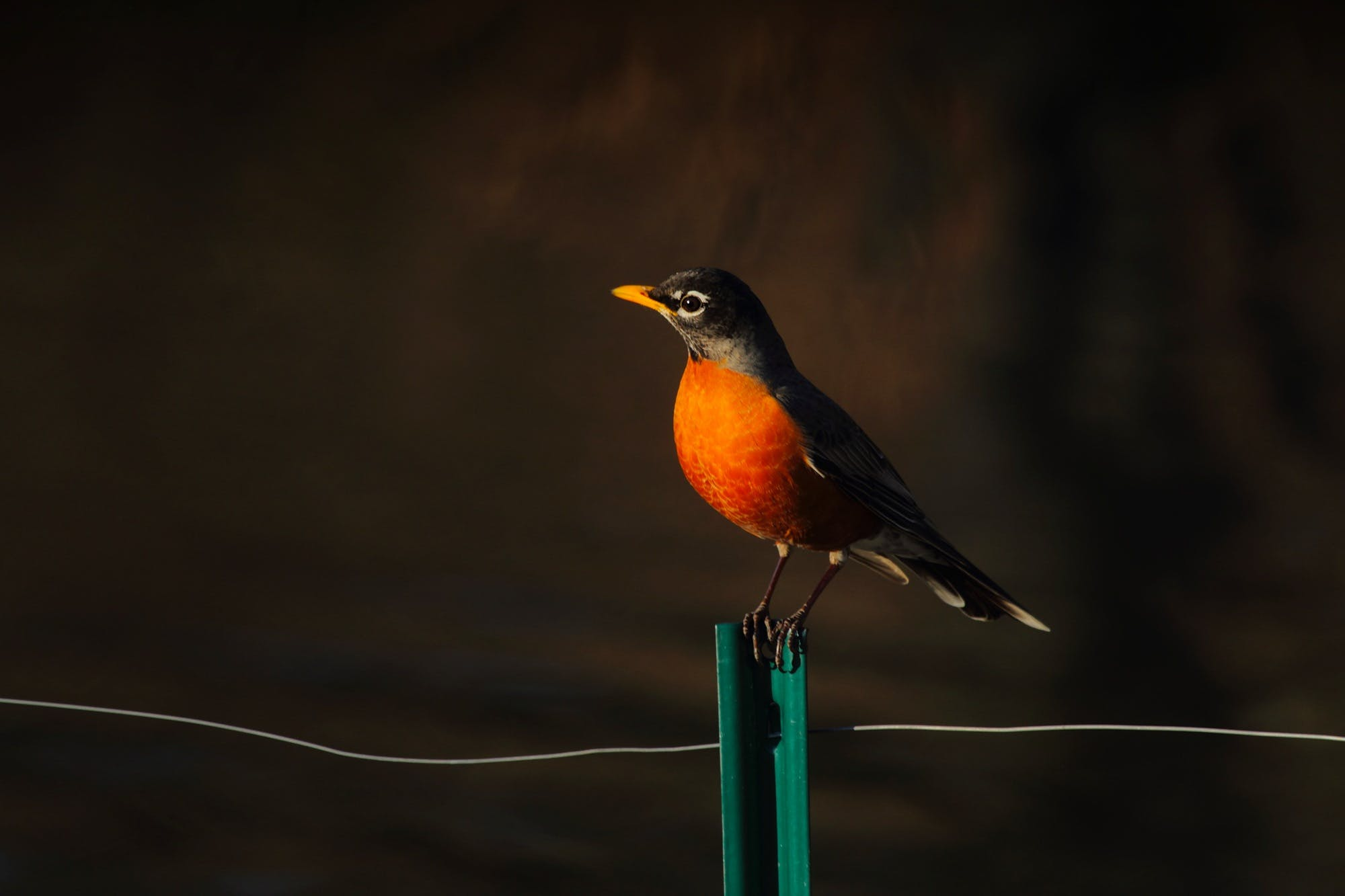 Bird Perched on Stand