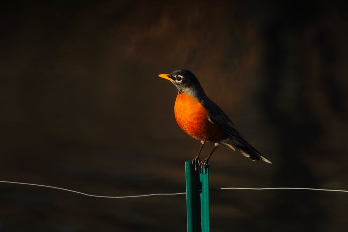 Bird Perched on T post