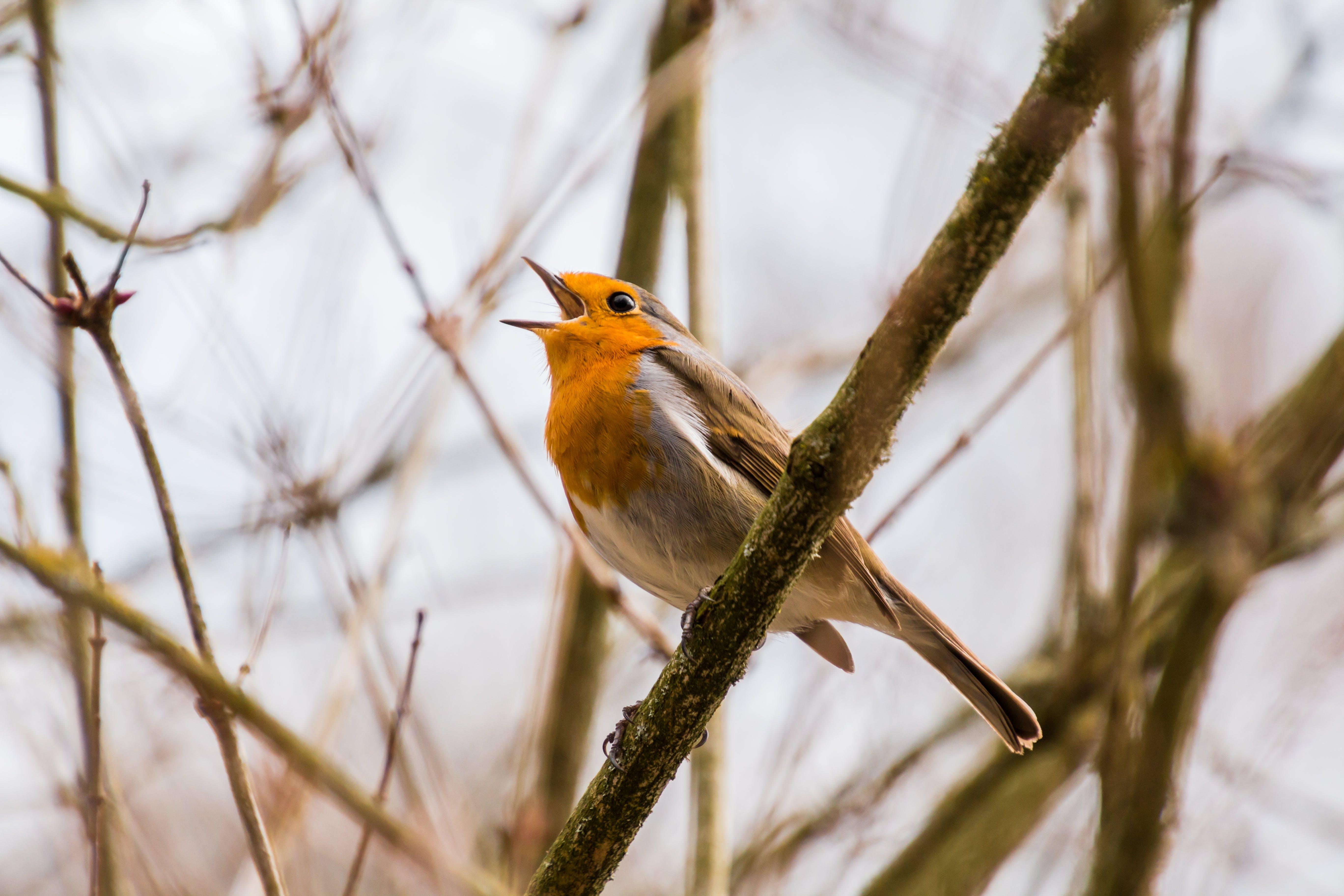 Kostenloses Stock Foto zu vogel, tier, sitzen, frühling