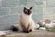 rocks, animal, pet