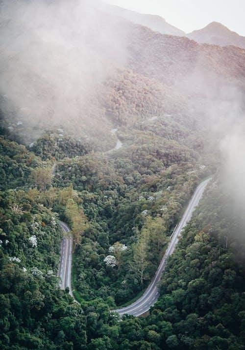 Darmowe zdjęcie z galerii z drzewa, fotografia lotnicza, fotografia przyrodnicza, góra