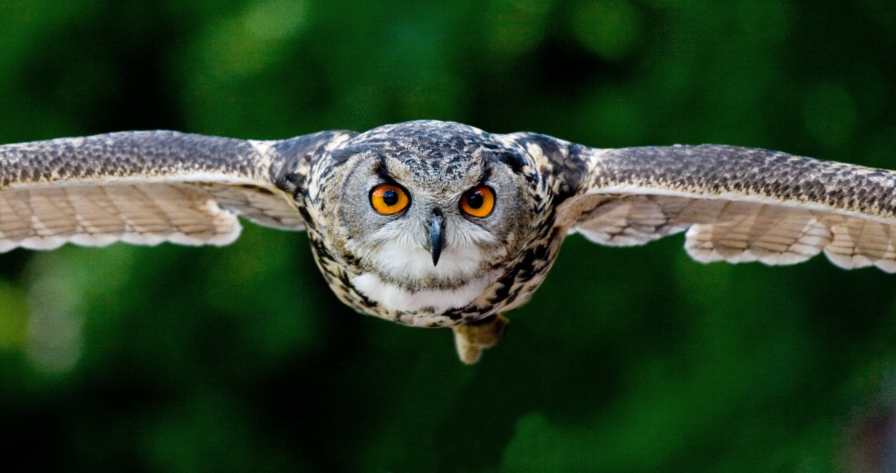 43 colourful owl pictures pexels free stock photos