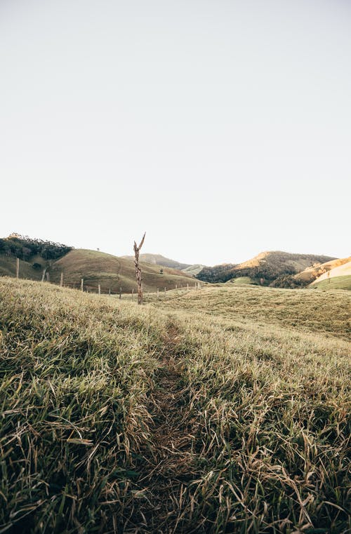 國家, 夏天, 小麥, 戶外 的 免費圖庫相片